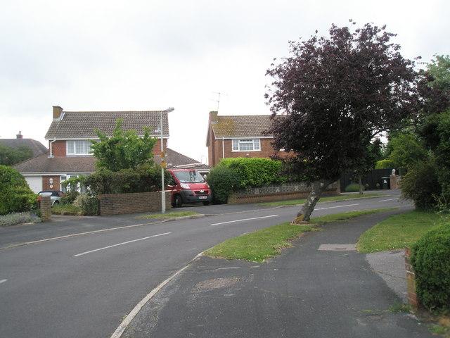 Leaning tree in Corbett Road