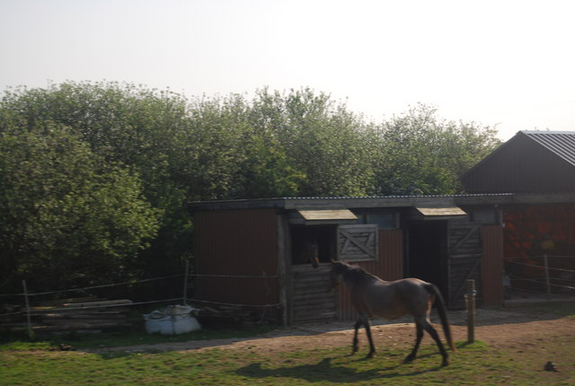 Horse and stable by the railway line