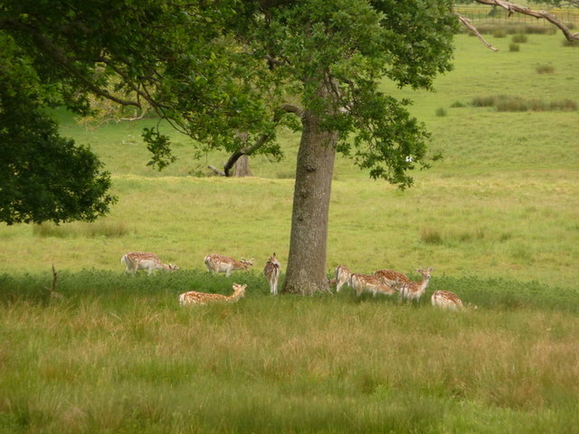 Stock Gaylard: deer under a tree
