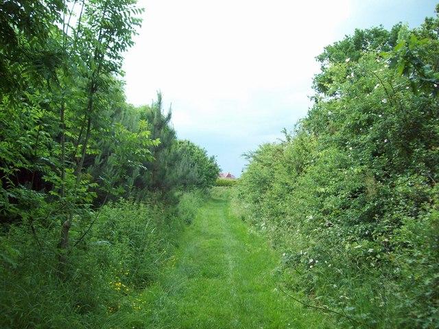 Beehive Farm Woodland near Rosliston