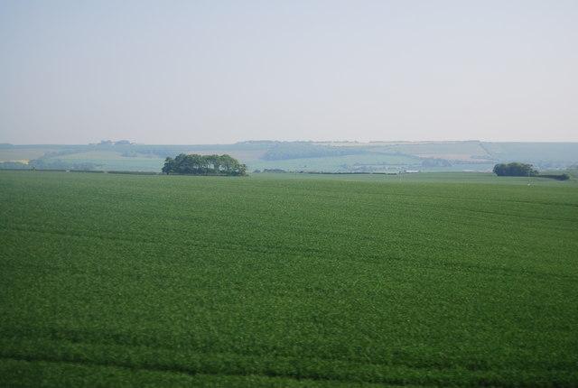 A very large wheat field near Lebberston