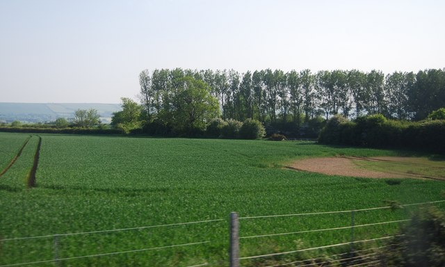 Wheat and woodland by the railway