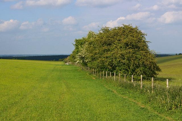 Grassland north of Draycott Hill