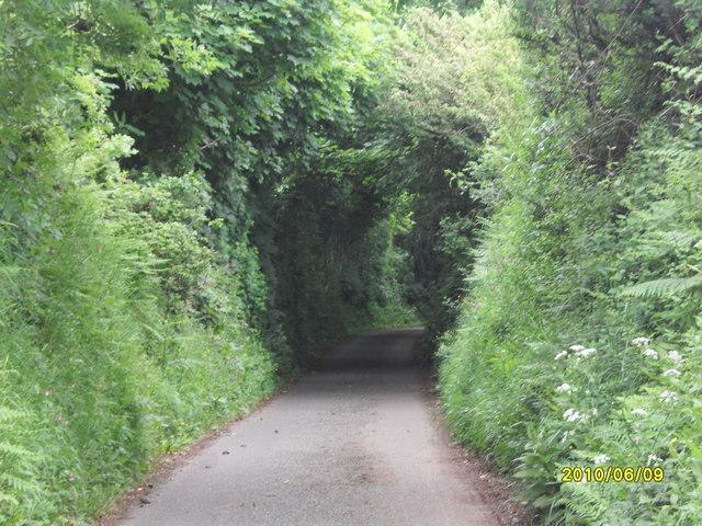 Wooded Lane, Brynsiencyn