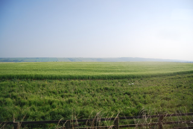 Wheat near Grove Farm