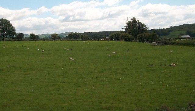 Sheep pastures at Rhwngddwyryd