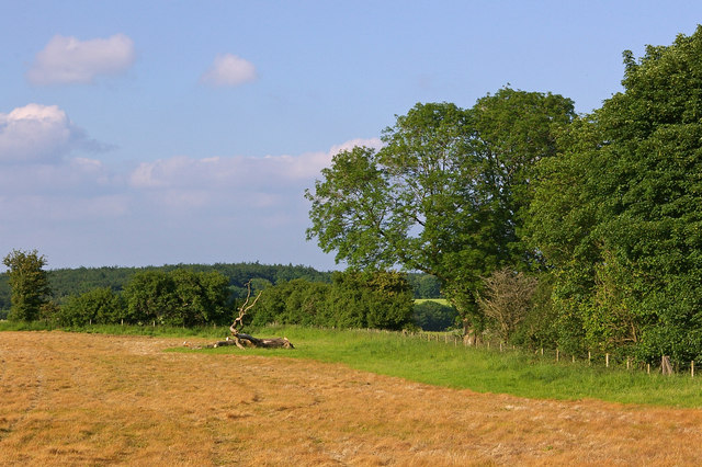 Field south of Shaw Copse