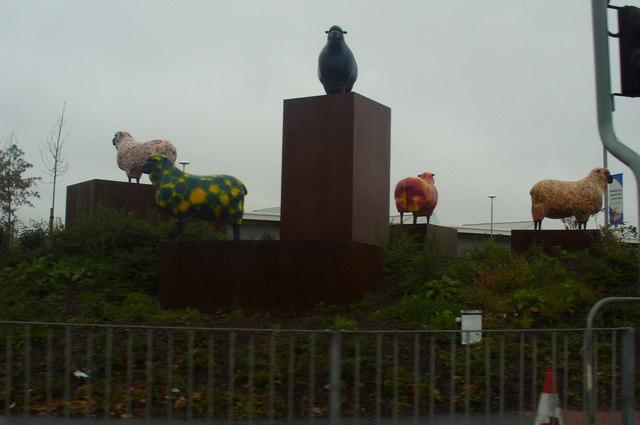 Multi-coloured Sheep, Harlescott, Shrewsbury