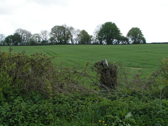 Field near Ferne
