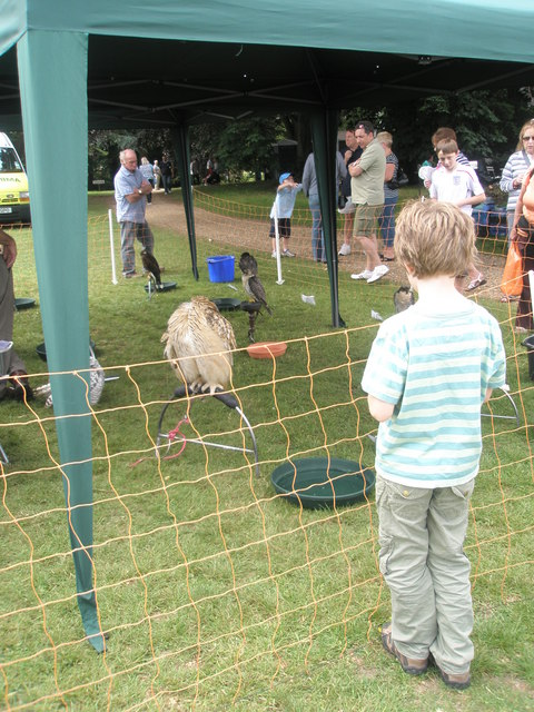 Intrigued spectators at the birds of prey display at Stansted