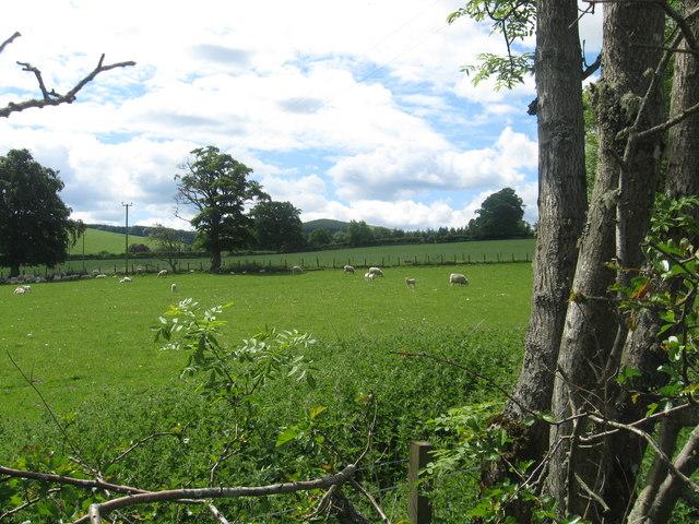 Grazing lands at Mackside