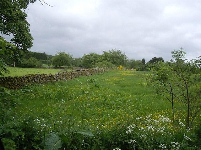 A meadow in June