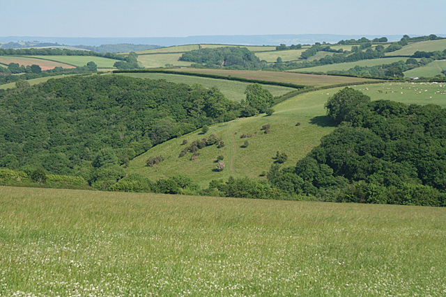 Stoodleigh: towards Rifton Wood