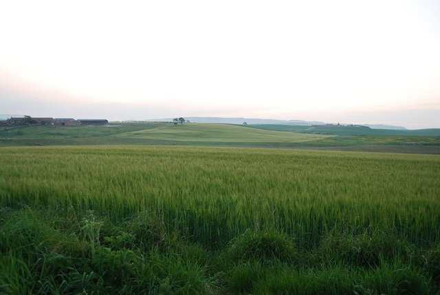 Wheat fields by the Tabular Hills Walk