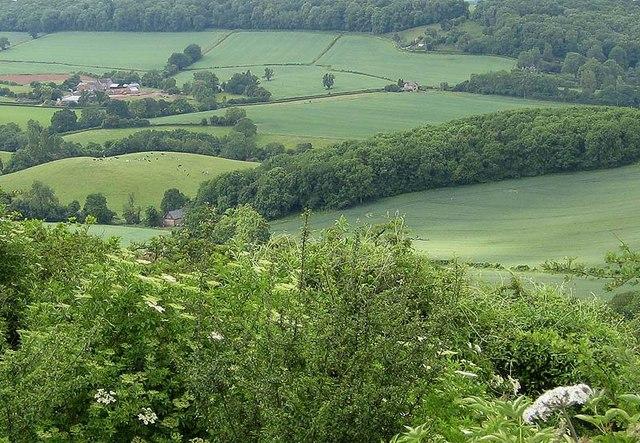 Lyndalls Wood from Ridge Hill