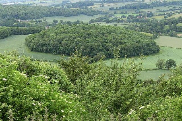 Whittlebury Wood from Ridge Hill