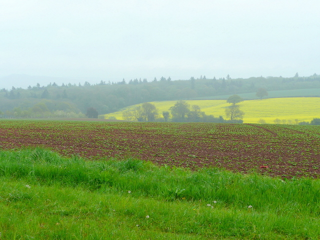 Farmland in springtime