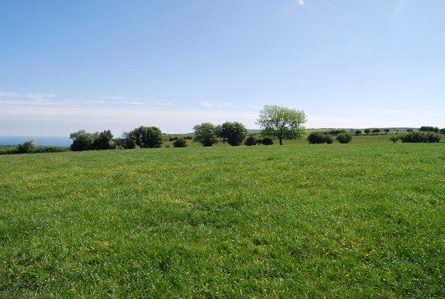 Pasture, Low Flask Farm