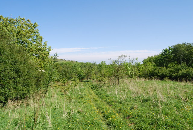 Footpath through young trees, Harry's Folly