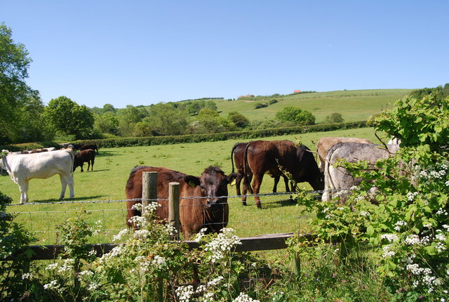 Bullocks, Colcroft Farm