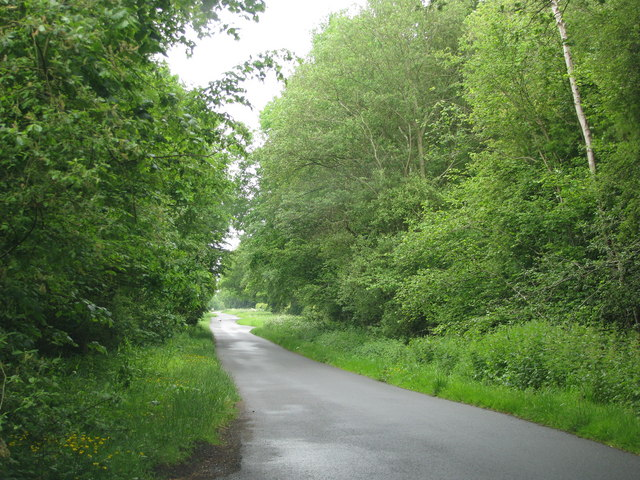 Road past Walker's Copse