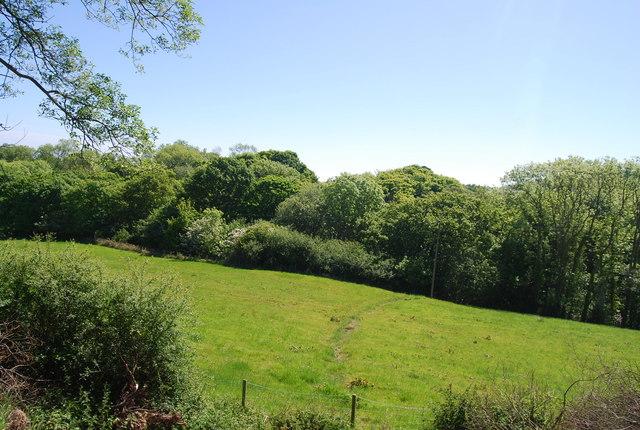 Woodland along Mill Beck
