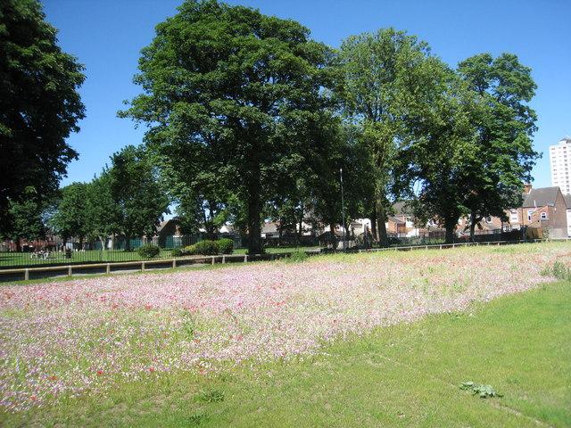 Wildflower meadow, West Street, Scunthorpe
