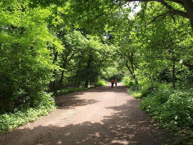 Path on Hampstead Heath