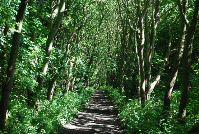 Old railway line in the trees