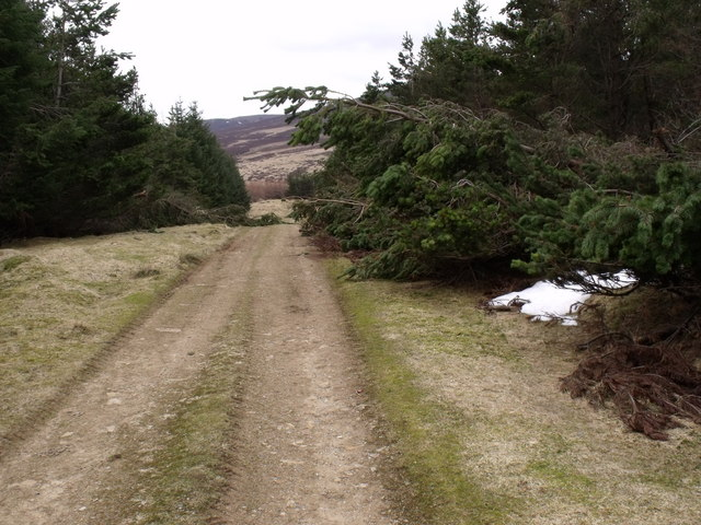 Forestry damage by Nether Howbog access track