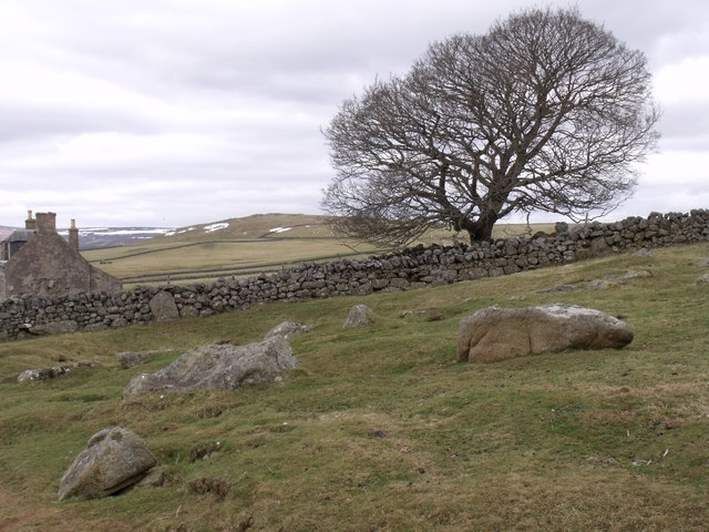 The family tree in-by Nether Howbog