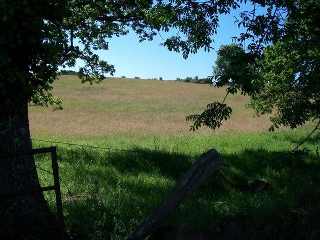 Meadow at Bryngolau