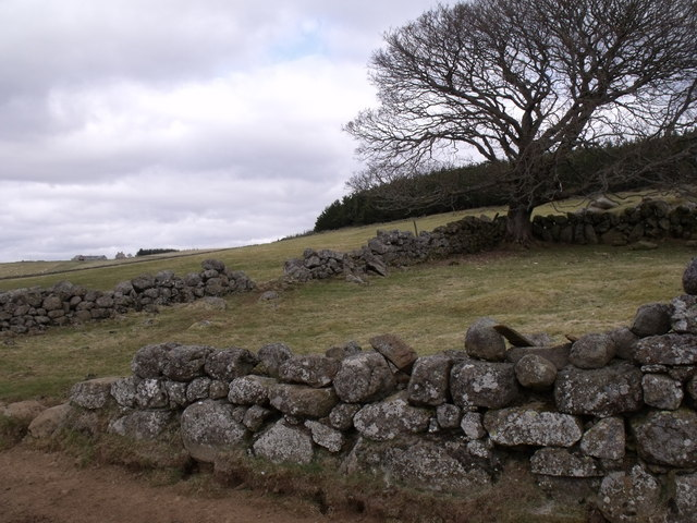 In-by paddock at Nether Howbog