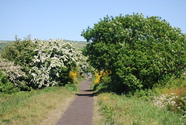Old railway line: northwards