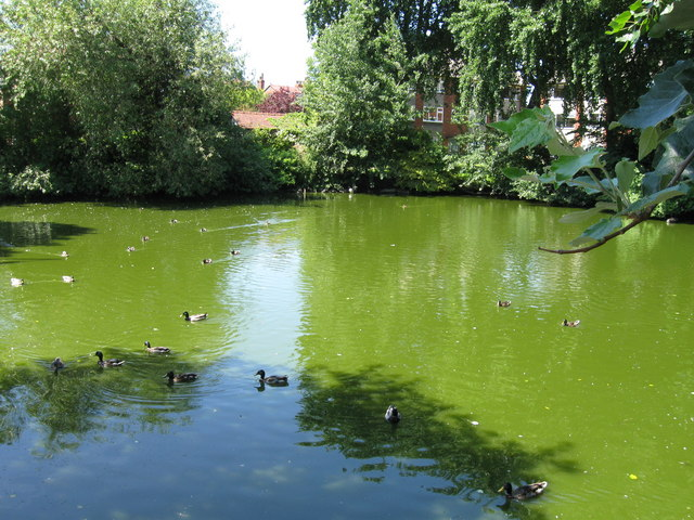 Duck Pond, Victoria Road West, Crosby