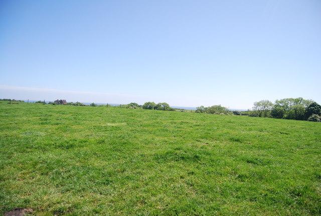 Pasture, Middlewood Farm