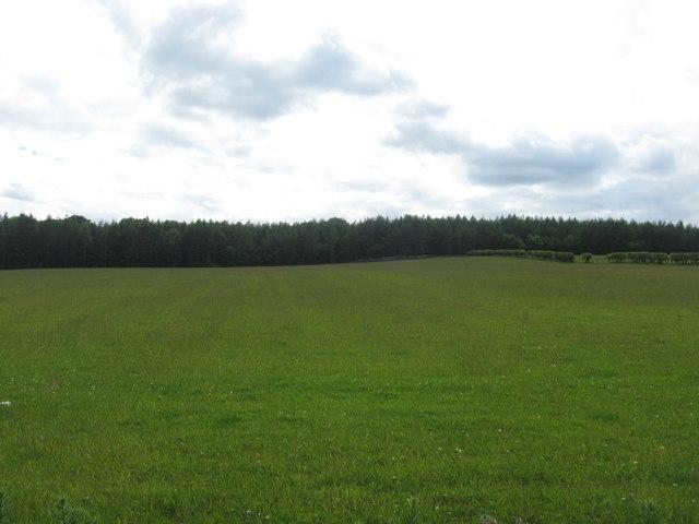 Grasslands near Edgerston
