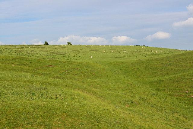 Downs north of Huish