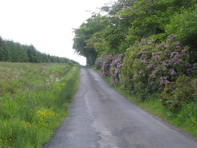 A minor road splashed in splendour