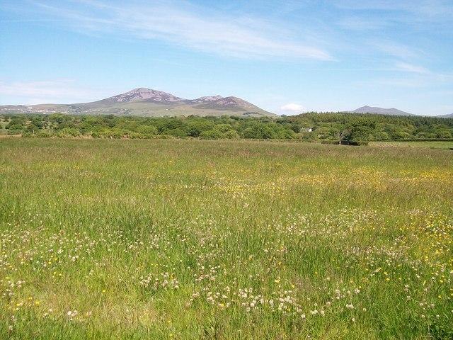 Hay meadow north of Brynaerau