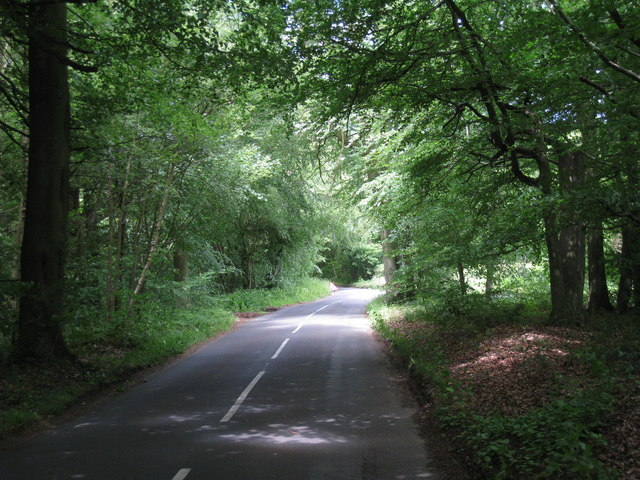 Road Through Fawke Common