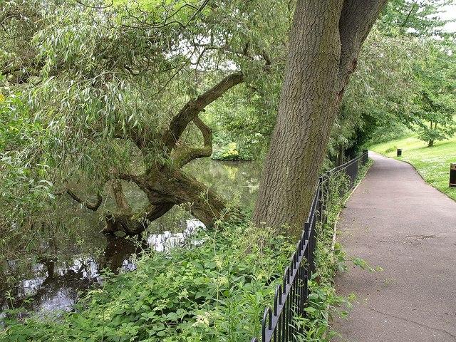 Willow, Waterlow Park