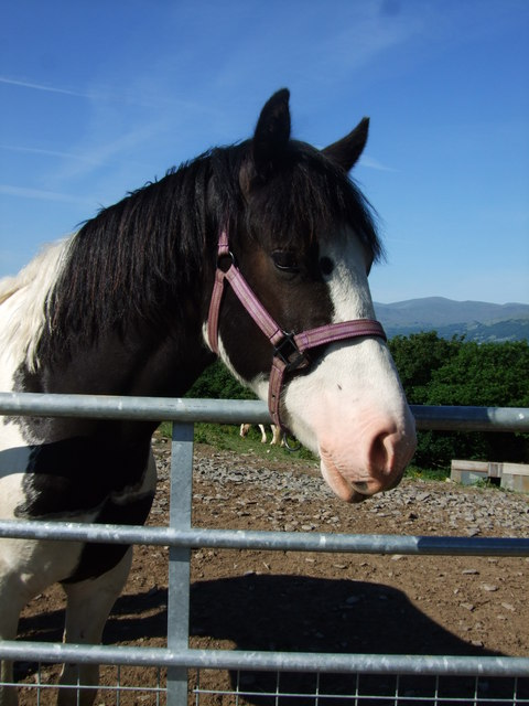 Friendly fella in Glan Conwy