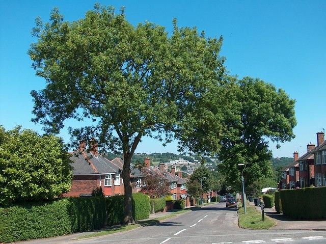 Hollythorpe Road looking east