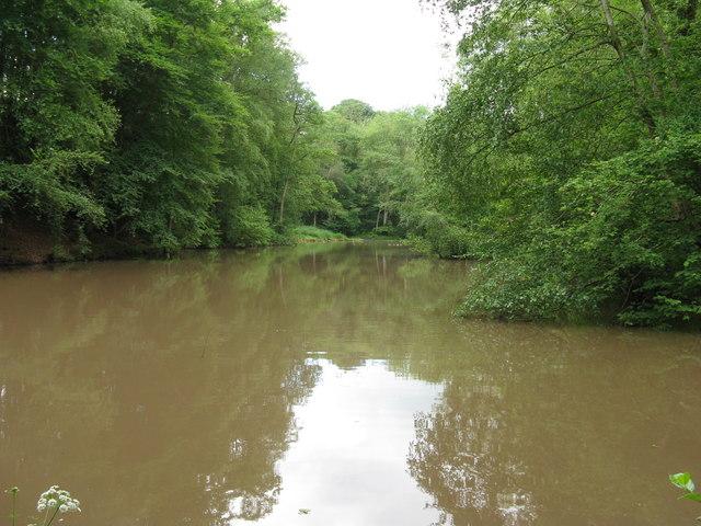 Roaringpond near Pickhurst