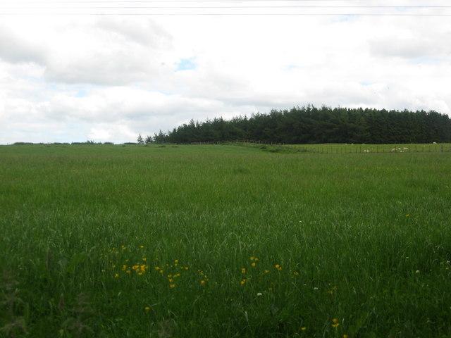 Farmlands on Mervins Law