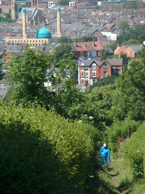 Path between allotments with Wolseley Road Mosque in background