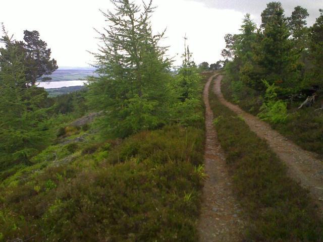 Forest track above Creag Ruadh