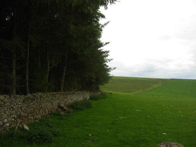 Woodland margin and grazing land near Ashtrees