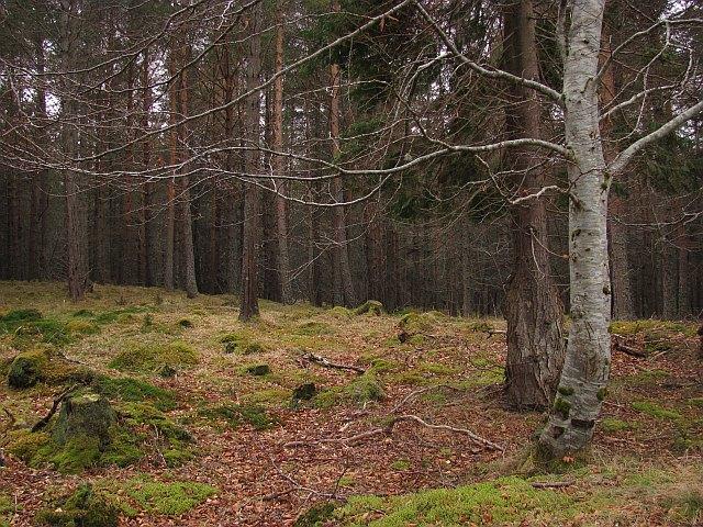 Altnaharra Wood